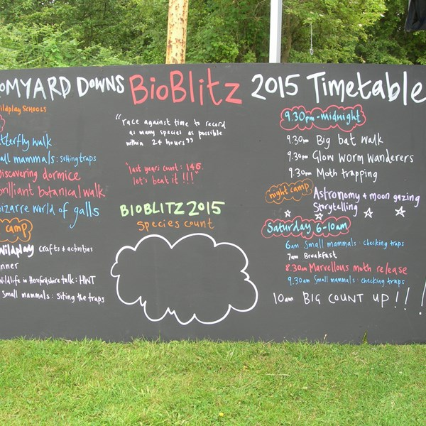 Bioblitz wildlife weekend 2015