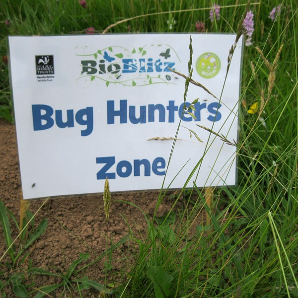 Wildplay Bioblitz 2015