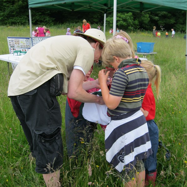Identifying crawlies - Bioblitz 2015