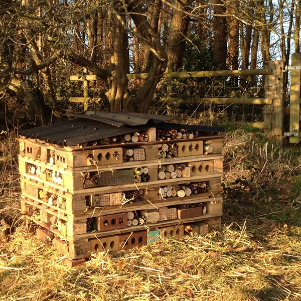 Bug Hotel made by school children