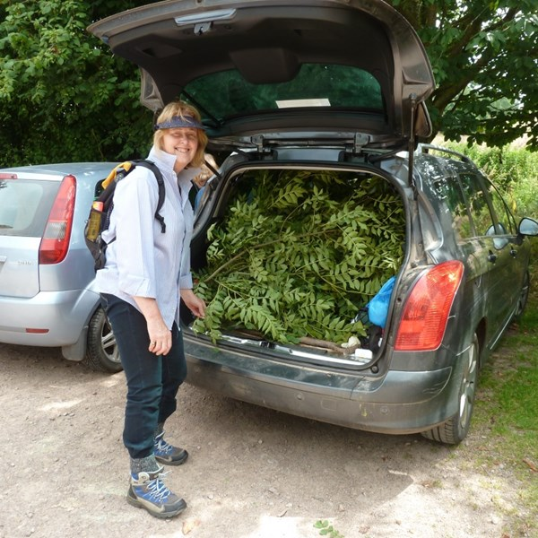 Boot full of tree fodder
