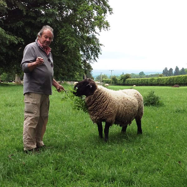 Ted Green and sheep