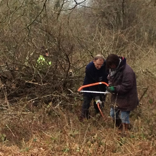Scrub clearance with volunteers